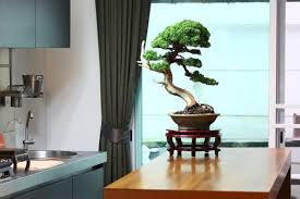 very nice a japanese bonsai looks in combination with a chandelier which simulates a tree branch this plant theme can be continued with flowers decor on bonsai tree interior
