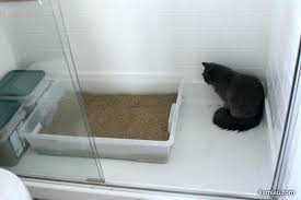cat box solutions cat litter solution kitty litter tips and tricks best cat  litter box solutions
