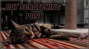 diy cat scratching post super and easy
