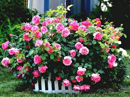 Small Picture Best Of Beautiful Rose Garden Design Ideas Wallpaper Decorating