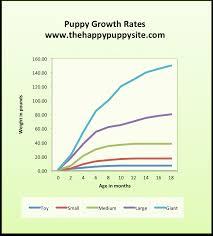 How Quickly Do Belgian Tervurens Grow Pets Stack Exchange