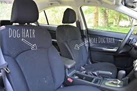 can you see why we were in the market for some dog car seat covers