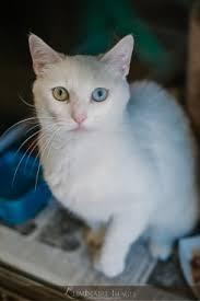 humane society kittens for adoption. Exellent Kittens REQUIREMENTS FOR ADOPTION On Humane Society Kittens For Adoption T