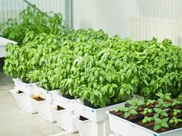 how to build a hydroponic garden. hydroponic veggie garden how to build a c