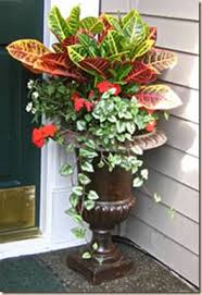 Small Picture Best 10 Outdoor potted plants ideas on Pinterest Potted plants