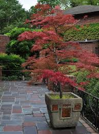 Small Picture 16 best Japanese maple images on Pinterest Autumn Landscapes
