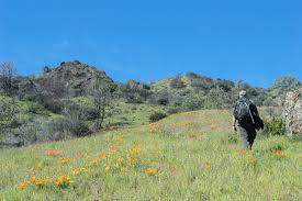 joan hamilton is an environmental writer and editor who produces audible mount diablo a series of mobile audio tours on perkins canyon for her