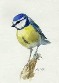 bird painting watercolor bird bluebird original watercolor painting cyanistes caeruleus