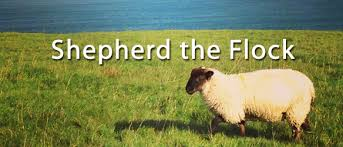Image result for shepherd and flock pictures