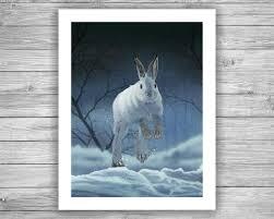 snowshoe hare 8x10 giclee art print