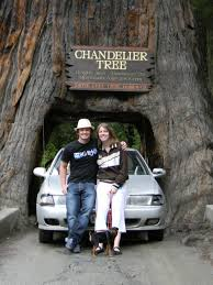 post navigation tour thru tree