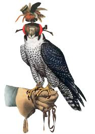 Art of Falconry or hunting with Birds of Prey | Birds of prey, Falconry,  Pet birds