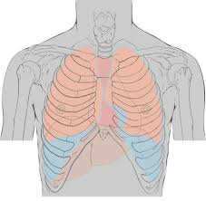sharp pain in chest. sharp pain in middle of my chest or upper abs. hurts to cough \u0026 sneeze