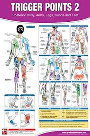Trigger Point Therapy Chart Poster Set Acupressure Charts