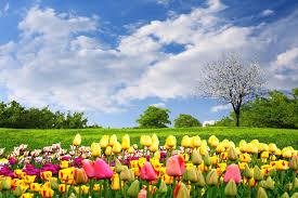 essay about spring season white lie essay resume cv cover letter forstudy space mausam e bahar shayari in urdu spring season poetry