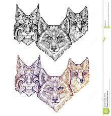 тату волк рысь и лиса иллюстрация штока иллюстрации насчитывающей