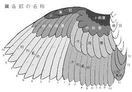 鳥 羽 構造 Google поиск Sparrows2019 着物 袖動物鳥