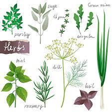 herbs mint onion arugula parsley basil rosemary sage