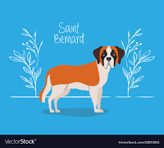 Cute saint bernard dog pet character ...