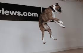 The Best Pet Insurance Companies For 2019 Reviews Com