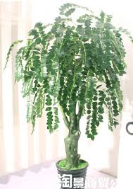 office feng shui plants. Simulation Fake Trees Bonsai Plants Feng Shui Tree Corporate Office Decoration 1.7 Meters Green String