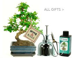 we offer the very best collection of bonsai birthday gifts wedding aniversary gifts get well retirement and celebration gifts