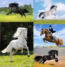 7 horse images free stock photos