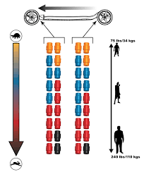 Longboard Weight Chart Onda Core Motion Skateboard Cool Tools