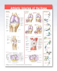 Athletic Injuries Of The Knee Chart 20x26 Clinicalposters