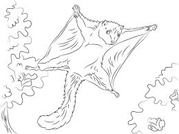Leuke Vliegende Eekhoorn Kleurplaat Gratis Kleurplaten Printen