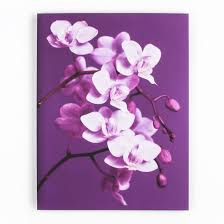 purple orchid printed canvas  on purple orchid wall art with purple orchid printed canvas wall art grahambrownnz