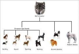 Dog Scientific Classification Chart Web Page