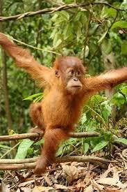 live jungle animals. Unique Live Tropical Rainforest Animals And Plants   Rainforestanimalspicturesof Animalsthatliveinthetropical With Live Jungle V