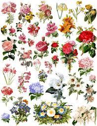 vintage flower sheets flowers collage sheet digital scrapbook scrapbooking decoupage