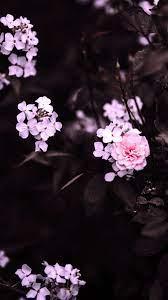 Flower Wallpaper Iphone Hd