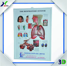 Anatomical Chart Posters 2017 3d Wall Anatomical Chart 3d Advertising Poster Buy 3d Advertising Poster Anatomical Chart 3d Advertising Poster 3d Wall Anatomical Chart 3d