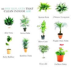 types of indoor palms palm bush types type of house plants types of indoor palms diffe