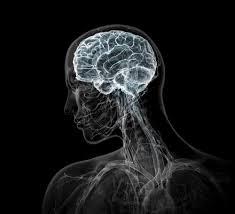Bryan Christie Design Bryan Christie Design Pharmaceutical Brain