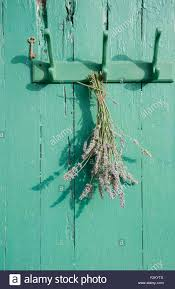 Old Coat Rack Bunch of lavender hanging on an old coat rack Stock Photo Royalty 58