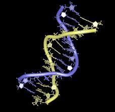 genetic engineering ethics essay genetic engineering  genetic engineering ethics essay