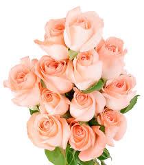 peach roses google search