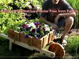 wheelbarrow planter free from pallets