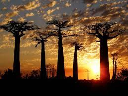 Resultado de imagem para IMAGENS DE COMIDA DE MADAGASCAR