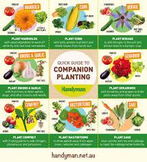infographic guide to companion planting handyman