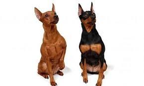Desaparición de perros durante la cuarentena