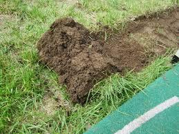 Diy Sod Creating A Garden Bed Sod Stripping 101 Loving Here