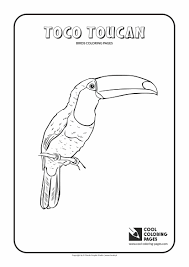 Small Picture Toco toucan coloring page Cool Coloring Pages