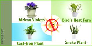 Best office plants no sunlight Houseplants Indoor Plants No Sunlight Indoor Flowering Plants Without Sunlight The Hathor Legacy Best Indoor Plants Without Sunlight Learnncodeco