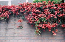 Discount Wall Climbing Plants  2017 Artificial Wall Climbing Wall Climbing Plants