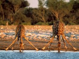 Африка класс Природные богатства Африки